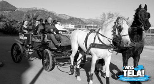 Carruaje de caballos Gandia